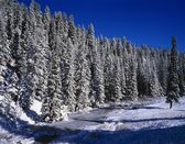 Beaver Dam Lined By Snow Covered Douglas Fir Forest, East Fork Of The Jemez River, Jemez National Recreational Area — Stock Photo
