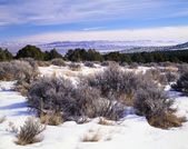 A High Desert Winter Landscape, Great Basin National Park — Stock Photo
