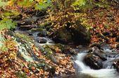 A Beautiful Autumn Stream — Stockfoto