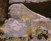 Ancient Petroglyph Rock Art Portraying Bighorn Sheep In Mojave Desert — Foto Stock