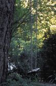 A Private Woodland Swing — Stock Photo