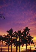 Palm Tree Silhouettes, Sunset, Waikiki Beach — Foto de Stock