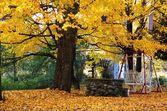 An Autumn Back Yard — Stock Photo
