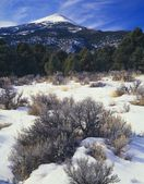 Winter Scene, Wheeler Peak, Great Basin National Park — Stock Photo