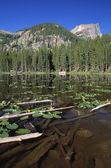 Lily Pads And Logs Floating In Nymph Lake With Hallett Peak In The Distance, Rocky Mountain National Park — Stock Photo