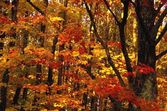 Vibrant Leaves Of Autumn — Stock Photo