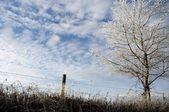 Frost Tree — Stock Photo