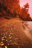 Autumn Shoreline — Stockfoto
