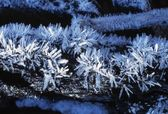 Hoar Frost — Stock Photo