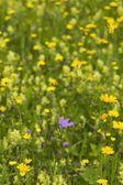 Květy — Stock fotografie