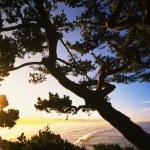 Sunshine Peering Through Trees Near Beach — Stock Photo #31706865