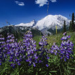 Stock Photo: Mount Ranier National Park