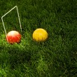 Stock Photo: Croquet Game