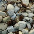 Stock Photo: Rocks And Pinecones