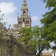 Stock Photo: Giralda, Seville, Spain