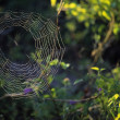 Spider Web — Stock Photo #31708467