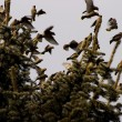 Stock Photo: Birds On Tree Tops