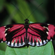 Stock Photo: Butterfly Close-Up