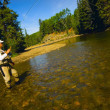 Foto de Stock  : Fly Fishing In Alberta