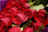 A Dozen Red Roses — Stock Photo