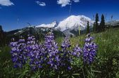 Mount Ranier National Park — Stock Photo