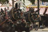 Decorated Horses — Стоковое фото