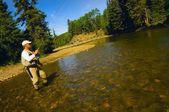 Fly Fishing In Alberta — Stock Photo
