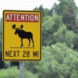 Stock Photo: Moose Crossing Sign