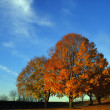 Autumn Trees — Foto de Stock