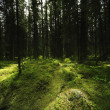 Stock Photo: Mossy Forest Landscape