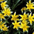 Stock Photo: Yellow Spring Flowers