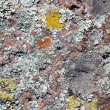Stock Photo: Lichen On Rock Surface