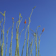 Stock Photo: Plant Stalks