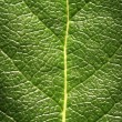 Foto de Stock  : Leaf Detail