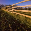 Stock Photo: Wooden Fence And Crops