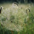 Spider Web — Stock Photo #31713963