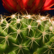 Close-Up Cactus — Stock Photo #31714789