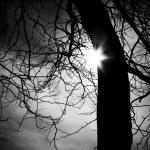 Tree Silhouette — Stock Photo
