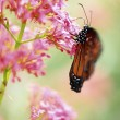 Stock Photo: Butterfly On A Flower