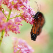 Butterfly On Flower — Stock Photo #31715559