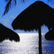 Stock Photo: Tropical Palm Hut Silhouettes