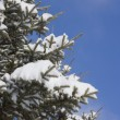 Stock Photo: Tree Covered With Snow