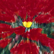 Stock Photo: Tulip Field Zoom Effect