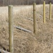 Stock Photo: Rural Fence Posts