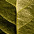 Leaf Detail — Foto de stock #31717157