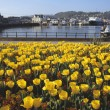 Stock Photo: Harbor In Oban