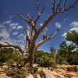 Stock Photo: Dead Tree
