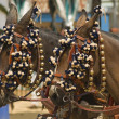 Stock Photo: Decorated Horses