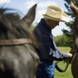 Stock Photo: Cowboy And Horses