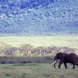 Stock Photo: Elephant In Wild